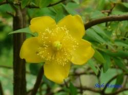 小石川植物園6月の花7