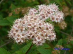 小石川植物園6月の花8