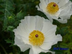 小石川植物園6月の花10