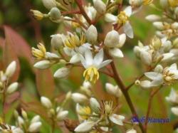 小石川植物園6月の花13
