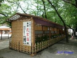 靖国神社花菖蒲1