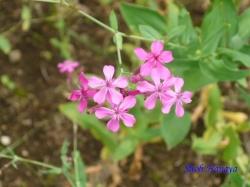 小石川植物園6月の花15A
