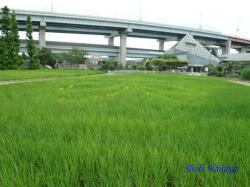 都市農業公園4
