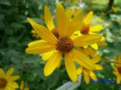小石川植物園の花2