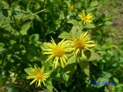 小石川植物園の花3