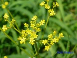小石川植物園の花4