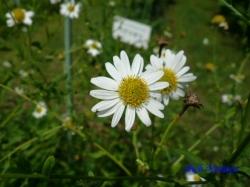 小石川植物園の花5