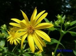 小石川植物園の花6