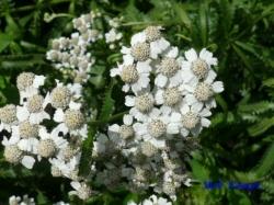小石川植物園の花7