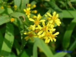 小石川植物園の花8