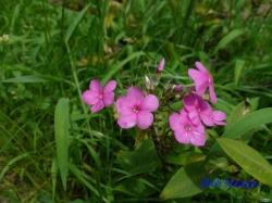 小石川植物園の花9