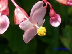 小石川植物園の花11