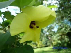 小石川植物園の花13