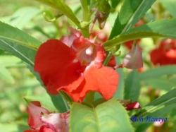小石川植物園の花14