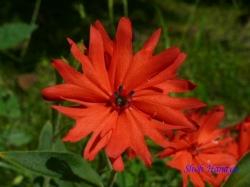 小石川植物園の花15