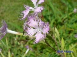 小石川植物園の花16