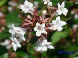皇居東御苑7月の花1