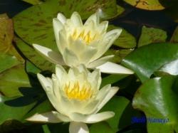 夢の島熱帯植物館2