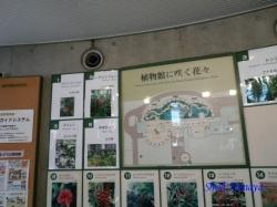夢の島熱帯植物館4