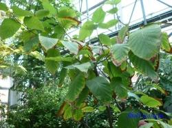 夢の島熱帯植物館7