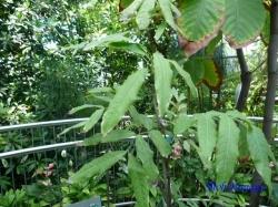 夢の島熱帯植物館8