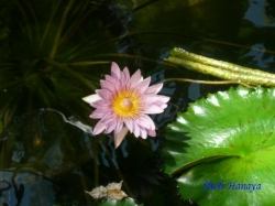 夢の島熱帯植物館11