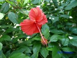 夢の島熱帯植物館13