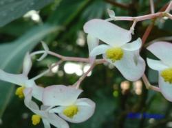夢の島熱帯植物館16