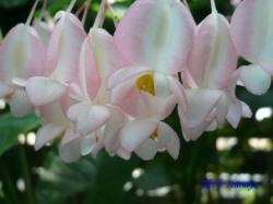 夢の島熱帯植物館17