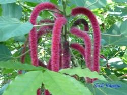 夢の島熱帯植物館23