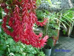 夢の島熱帯植物館24