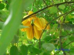 夢の島熱帯植物館26