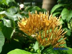 夢の島熱帯植物館29