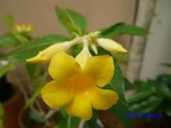 夢の島熱帯植物館36
