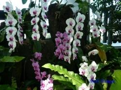 夢の島熱帯植物館のラン1