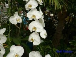 夢の島熱帯植物館のラン6