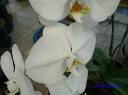 夢の島熱帯植物館のラン10