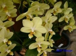 夢の島熱帯植物館のラン14
