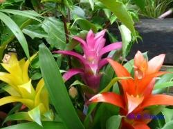 練馬区立温室植物園の花4