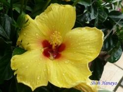 練馬区立温室植物園の花6