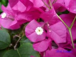 練馬区立温室植物園の花7