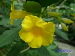 練馬区立温室植物園の花8