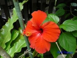 練馬区立温室植物園の花9
