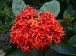 練馬区立温室植物園の花10