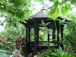 練馬区立温室植物園の花11
