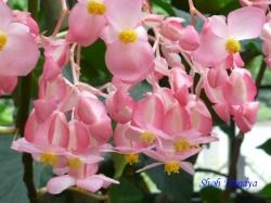 練馬区立温室植物園の花14