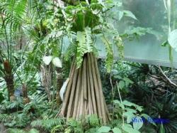 熱帯環境植物館2