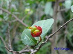 熱帯環境植物館3