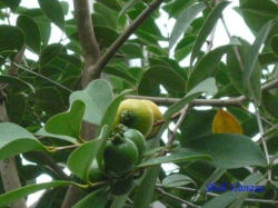 熱帯環境植物館4