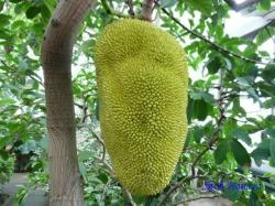 熱帯環境植物館5